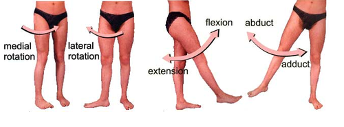 movements of hip joint