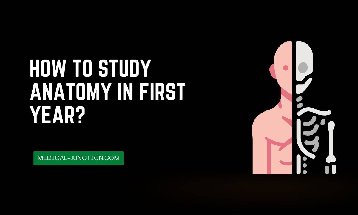 How to study anatomy in first year?